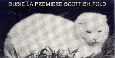 Susie, la première Scottish connue