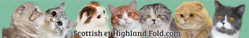 SCOTTISH FOLD & HIGHLAND FOLD.COM